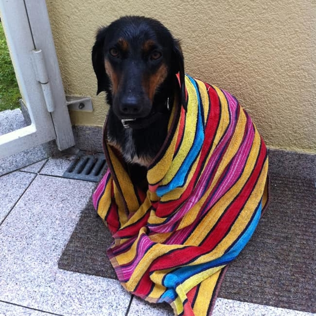 suesser-hund-in-handtuch