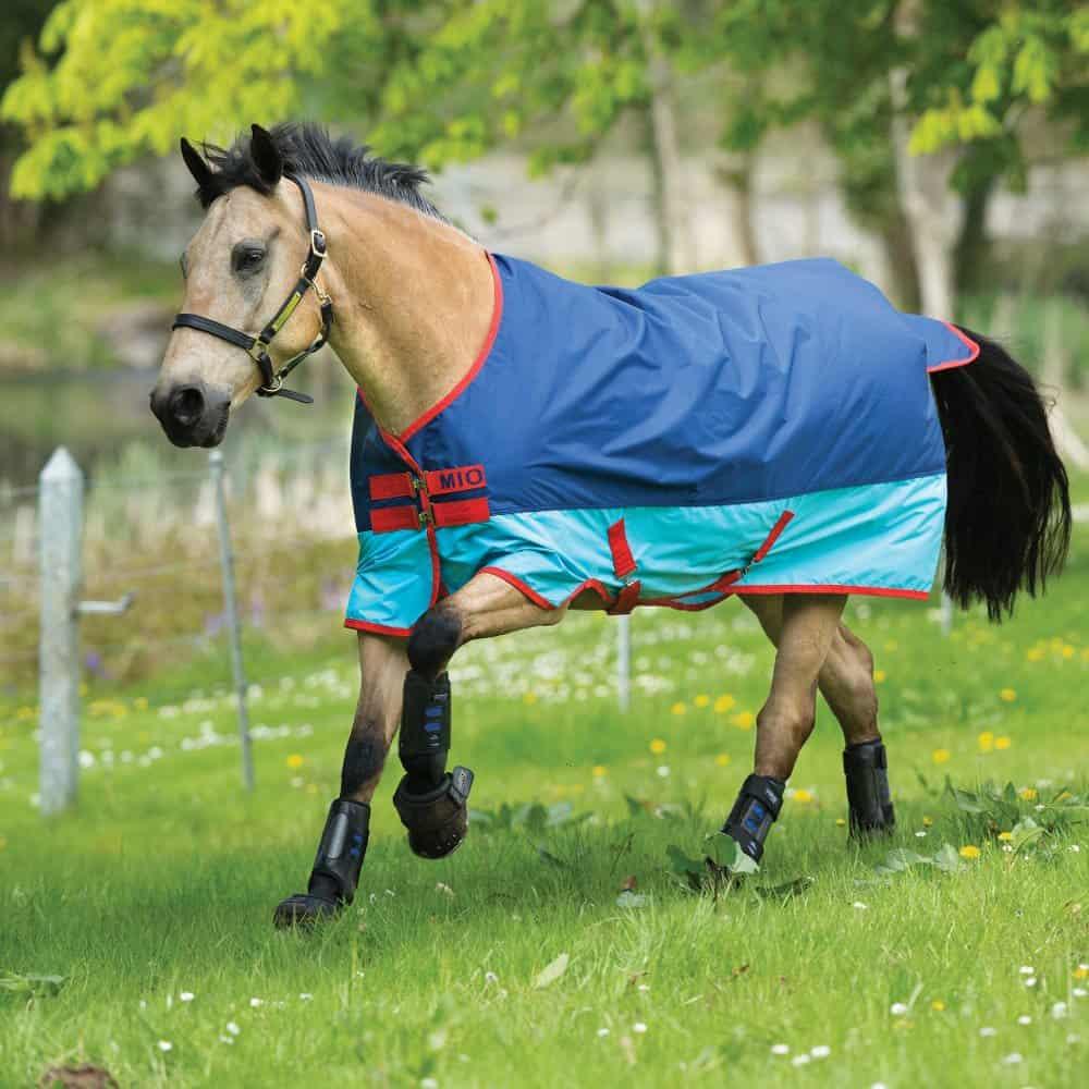 Pferd sich frau lässt decken vom Hunde und