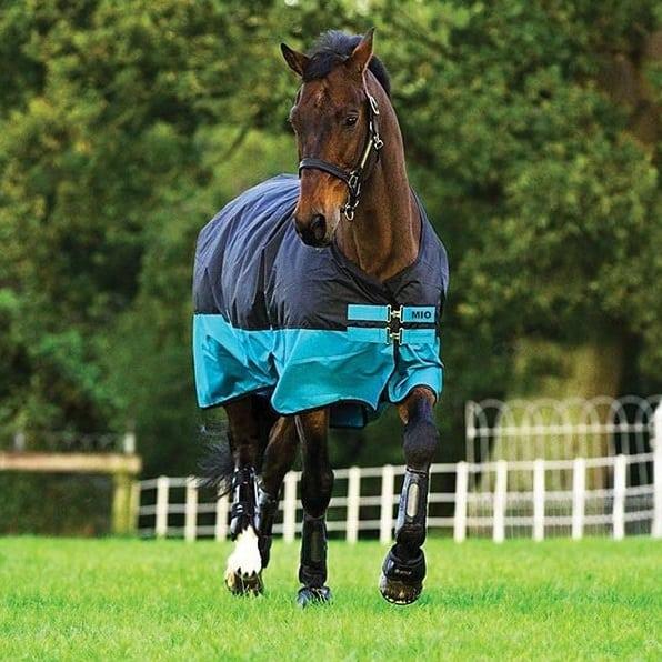 Decken vom lässt frau sich pferd Pony Hengst