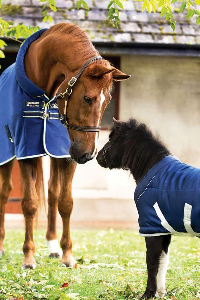 Grosses und kleines Pferd mit Perdedecke